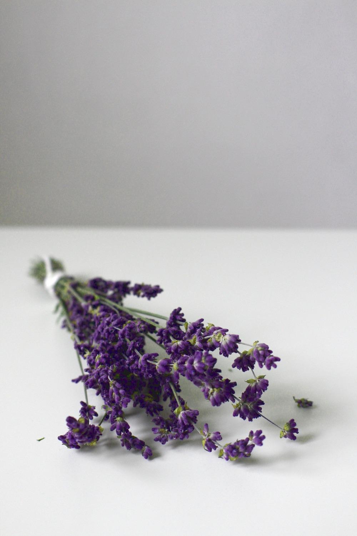 lavender-2898095_1920.jpg
